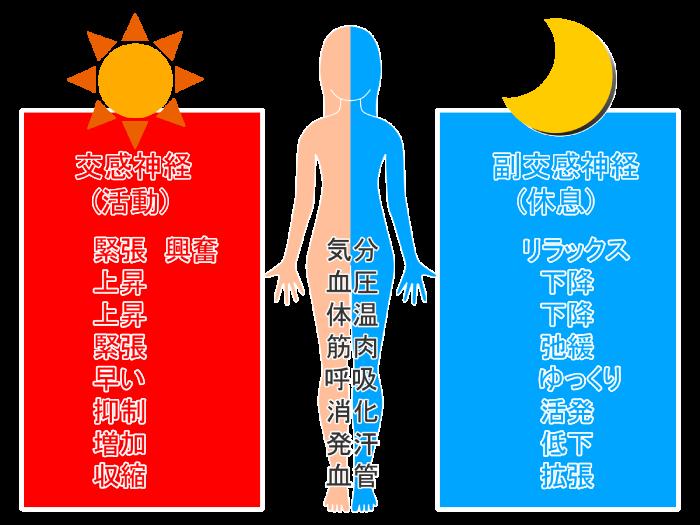 交感神経と副交感神経の機能比較