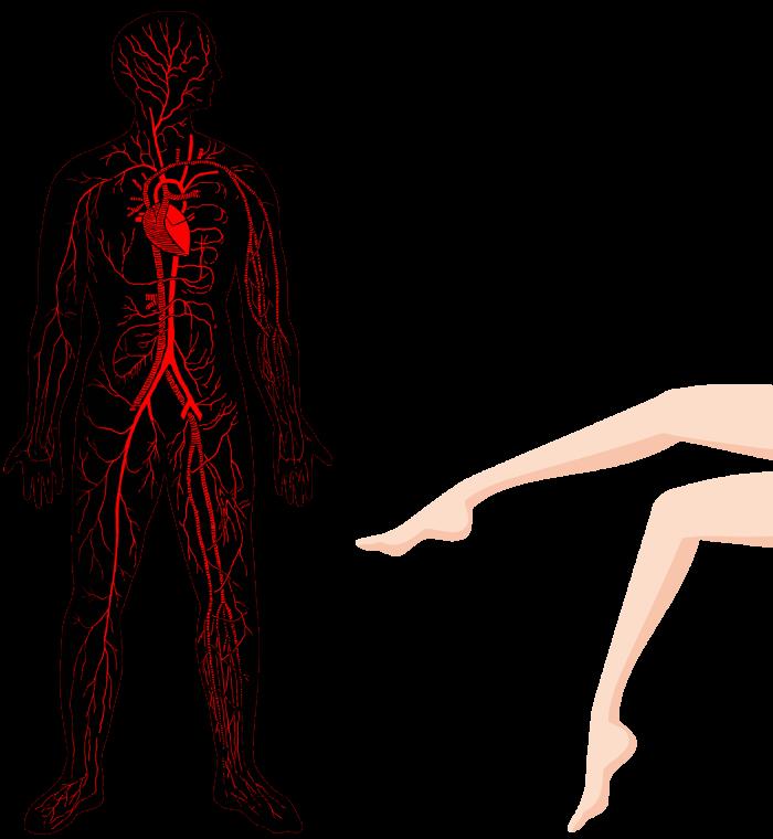 足の血液循環